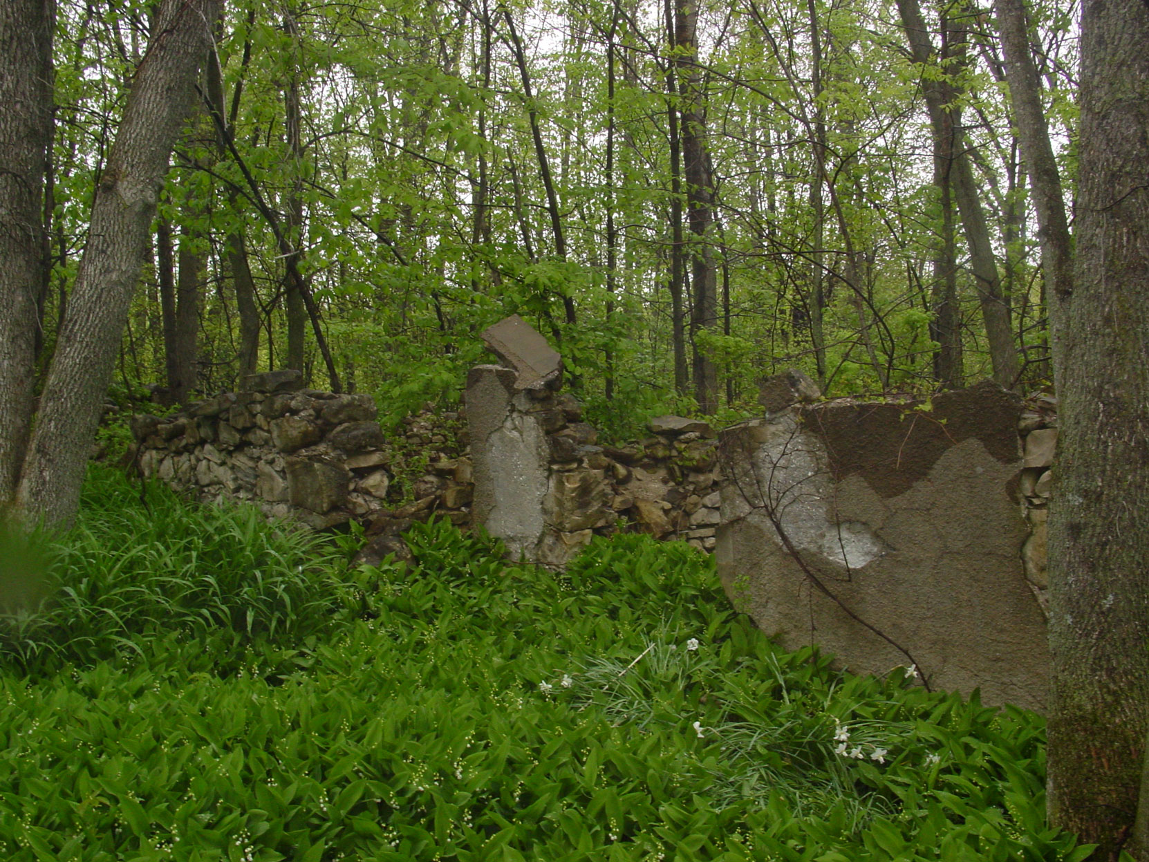 Ruins of the Owen Sound Portland Cement Company factory, Shallow Lake, Ontario, 2003. This possibly the remains of the Butchart house at the Shallow Lake factory site. (photo by author)