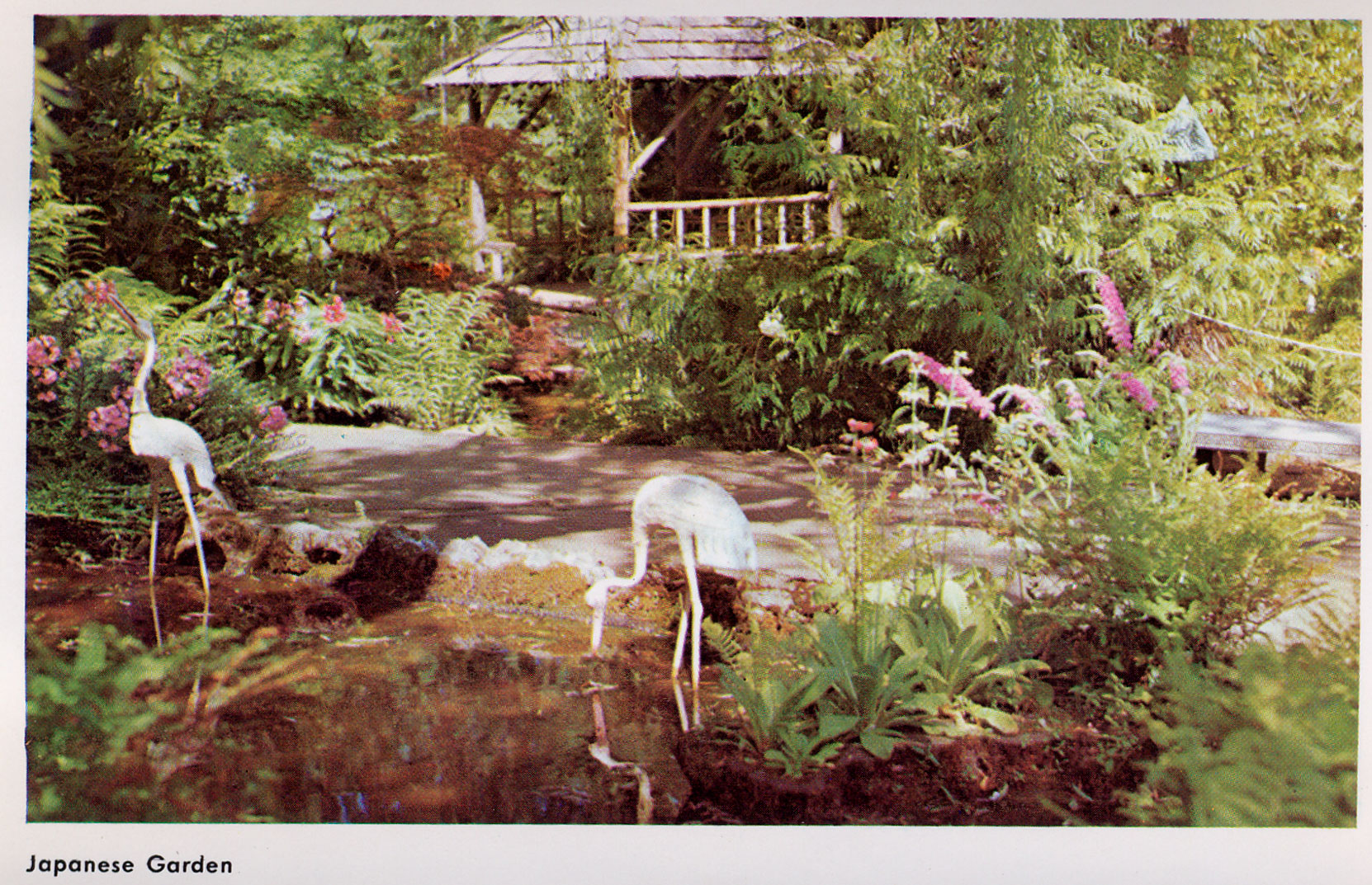Postcard showing the Japanese Garden, , circa 1960's. (Author's collection)